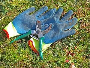 Wann Müssen Apfelbäume Geschnitten Werden : ziergras schneiden wann ist der beste zeitpunkt ~ Lizthompson.info Haus und Dekorationen