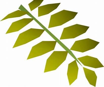 Curry Leaf Wiki Osrs