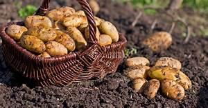 Kartoffeln Und Zwiebeln Lagern : kartoffeln lagern und aufbewahren 5 profi tipps mein sch ner garten ~ Markanthonyermac.com Haus und Dekorationen