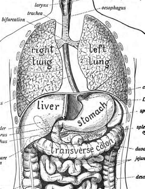 Coloring Atlas Of Human Anatomy by Anatomy And Interpretation Emily Greenleaf