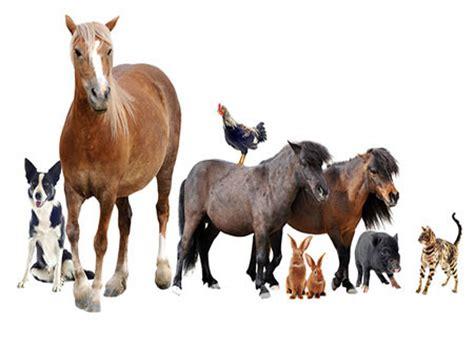 animal welfare level  smart majority