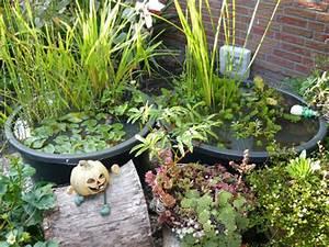 Kleine Gartenteiche Beispiele : wasserpflanzen teichpflanzen und seerosen f r den gartenteich richtig pflanzen garteninfo ~ Whattoseeinmadrid.com Haus und Dekorationen