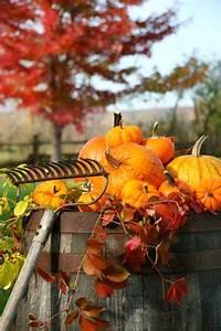 Garten Im Herbst : leuchtender herbst im garten garten blog ~ Watch28wear.com Haus und Dekorationen