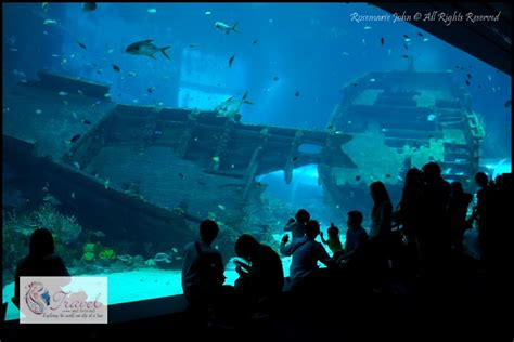 s e a aquarium the world s largest oceanarium