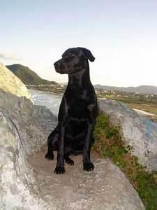 Urlaub Mit Hund Am Meer Italien : urlaub mit hund ~ Kayakingforconservation.com Haus und Dekorationen
