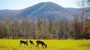 trips to great smoky mountains national park united states of america find travel information