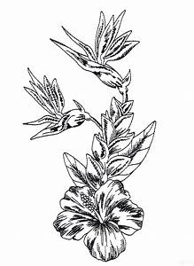 Tropical Flower Drawing Sketch Coloring Page View Larger