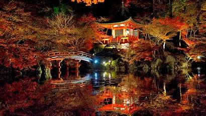 Night Japan Nature Forest Trees Lights Water