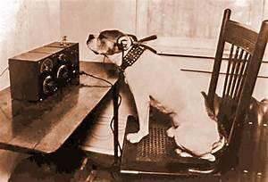 Dog Listening to Radio images