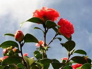 Winterharte Pflanzen Liste : winterharte pflanzen den garten das ganze jahr lang ~ Michelbontemps.com Haus und Dekorationen
