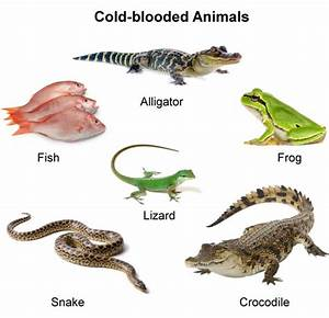 900-16665629-cold-blooded-animals - Zoopedia