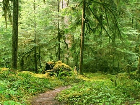 landscape, Nature, Tree, Forest, Woods, Path Wallpapers HD ...