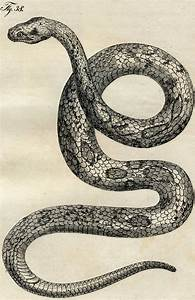 Early Vintage Snake Images - Cool Snake Art! - The ...