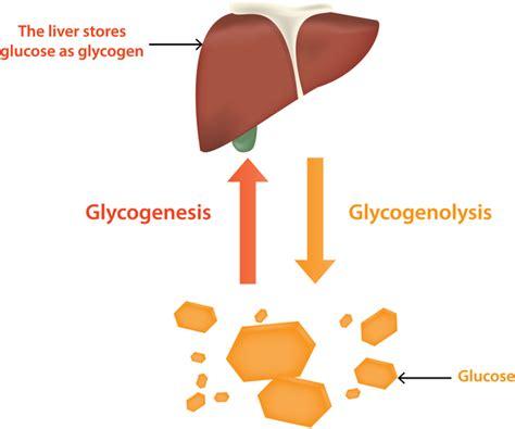 glycogen storage disease type  genetics home reference