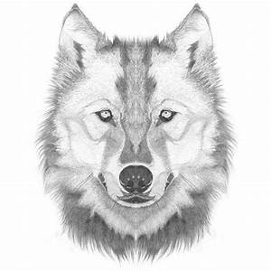 How to Draw a Wolf Head / Step By Step Lesson - Click Pic ...