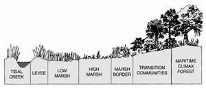What Is A Salt Marsh