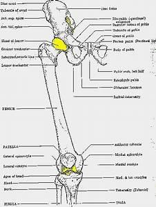 Skeletal System Bone Names