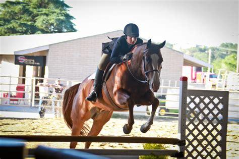 horse quarter horses jumping county robles paso 1960 obispo luis san slo showcase fair place only