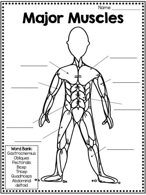 Thick band of fibrous connective tissue present between the ti… Muskelsystem: Mini-Einheit mit Funktionen, Muskeltypen und vielem mehr! - New Ideas | Muscular ...