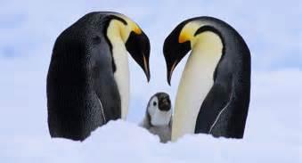 remembering  fellow earth inhabitants  world animal