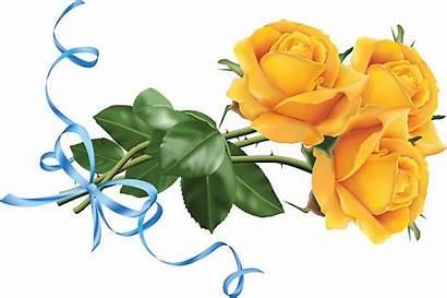 Roses Yellow Clipart Ribbon Vector Rose Clip