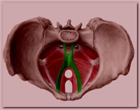 pelvic floor myalgia levator ani spasm levator ani symptoms treatment diagnosis causes