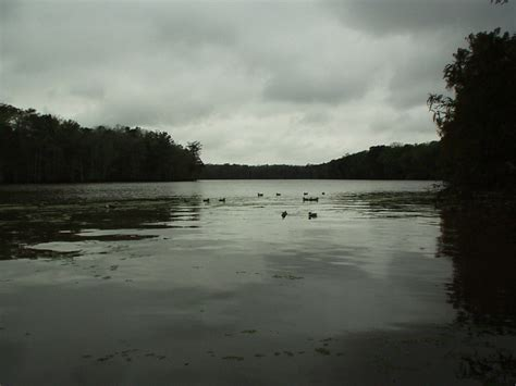 lake arthur la picture  duck decoys   river