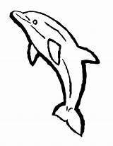 Dolphin Coloring Dolphins Bottlenose sketch template