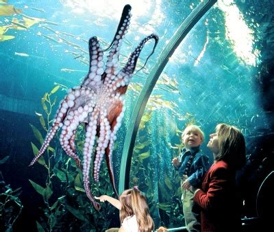 aquarium of the bay looking for family friendly activities in san francisco go city card