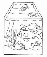 Fish Coloring Preschool Tank Pages sketch template