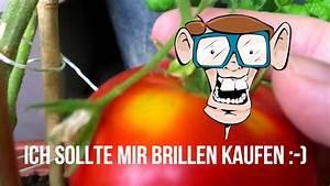 Wann Sind Brombeeren Reif : wann sind tomaten reif zum ernten balkongarten tipps youtube ~ Orissabook.com Haus und Dekorationen