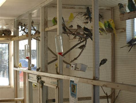 fertile parrot eggs and weaned babies for sale birds for
