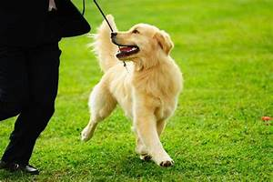 Should you hire a dog walker puplife dog supplies for Puppy dog walker