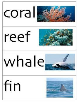 ocean vocabulary cards  cool kindergarten creations tpt