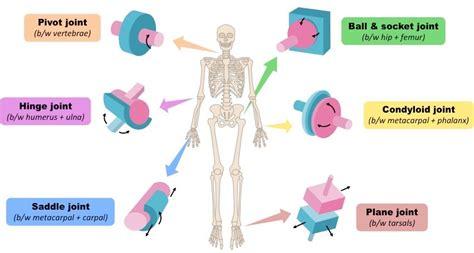 Brain Pop Bone Photos Virtual Skeleton