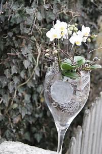Orchideen Im Glas : wundersch ne weisse orchidee im glas orchideen im glas ~ A.2002-acura-tl-radio.info Haus und Dekorationen