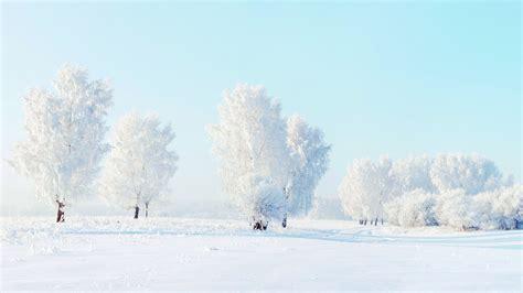 Full Hd Wallpaper Tree Winter Frost, Desktop Backgrounds