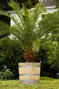 Bäume Verschneiden Obstbäume : k belpflanzen pflegen bew sserung d ngen beschneiden ~ Lizthompson.info Haus und Dekorationen