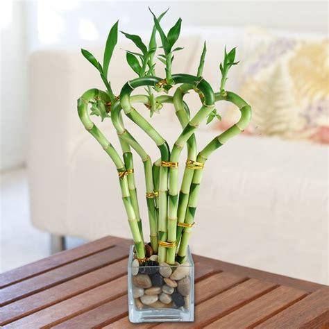 d 233 coration avec plantes d int 233 rieur supportant la lumi 232 re faible plantes int 233 rieur et vase