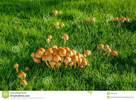 Pilze Im Garten Hund by Pilze Auf Einem Rasen Stockbild Bild Wachstum