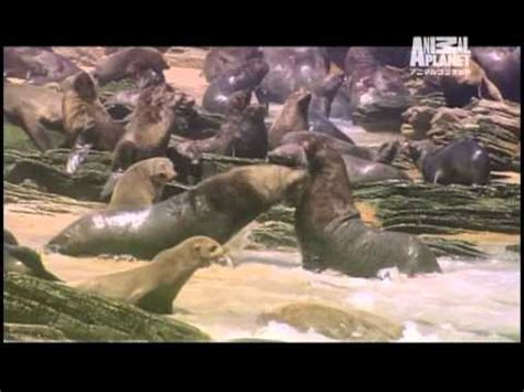 discovery channel animal planet spot youtube