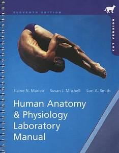 Human Anatomy  U0026 Physiology Laboratory Manual  Cat Version