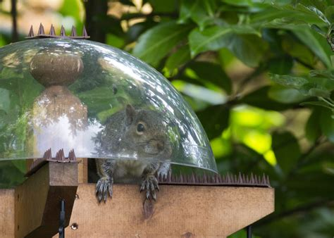 do squirrels eat nyjer seed 3 feeders v together 4 quot apart peanuts sunflower seeds nyjer seeds will different