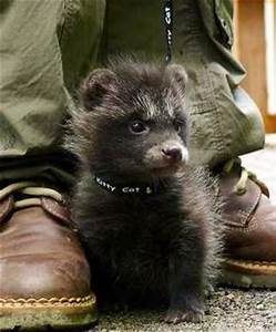 17 Best images about ROCKY RACCOON DOGS on Pinterest ...