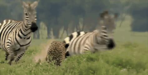 amazing animal animated gifs   animations