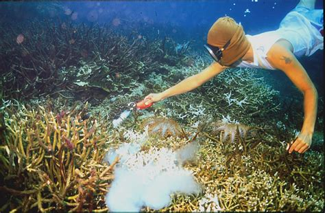 cyanide fish fishing caught tropical aquarium reef reefs coral poisoning james millions system patron client noaa medium cervino each into