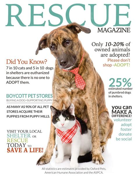 animal rescue marketing inspiration charitypaws