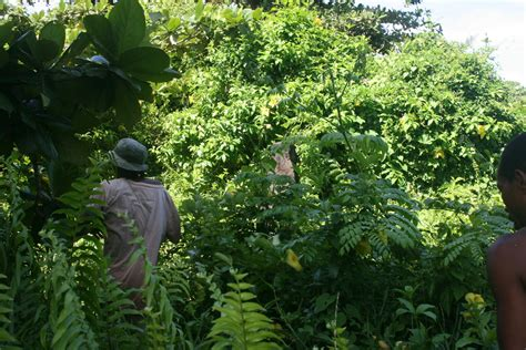 dakat ylang ylang des nattes foulpoint mada est