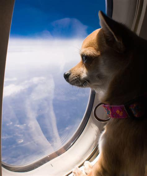 dog   airplane window stock image image