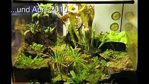 Pflanzen Für Terrarium : terrarium ohne bewegung youtube ~ Orissabook.com Haus und Dekorationen